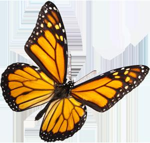buterfly-video-produccion-marbella-madrid-drone